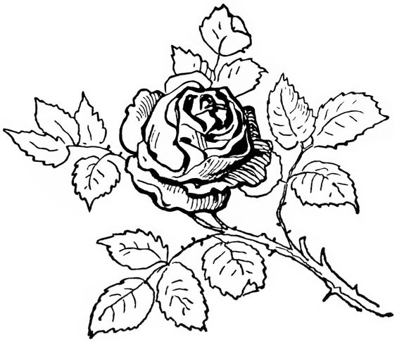 Rose  black and white clip art black and white design shop on