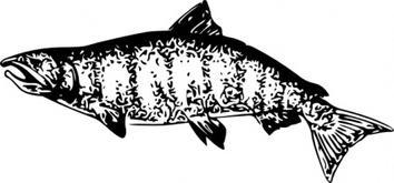 Salmon clip art free vector animals vectors 3