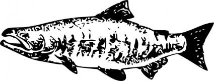 Salmon clip art free vector animals vectors