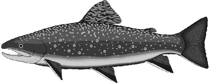 Salmon clipart etc 2 image
