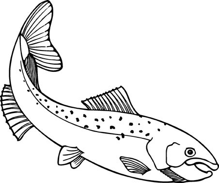 Salmon clipart salm and arte on