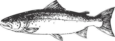 Salmon megapixl clipart