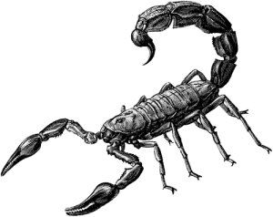 Scorpion clip art and google search on