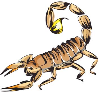 Scorpion clip art vector graphics
