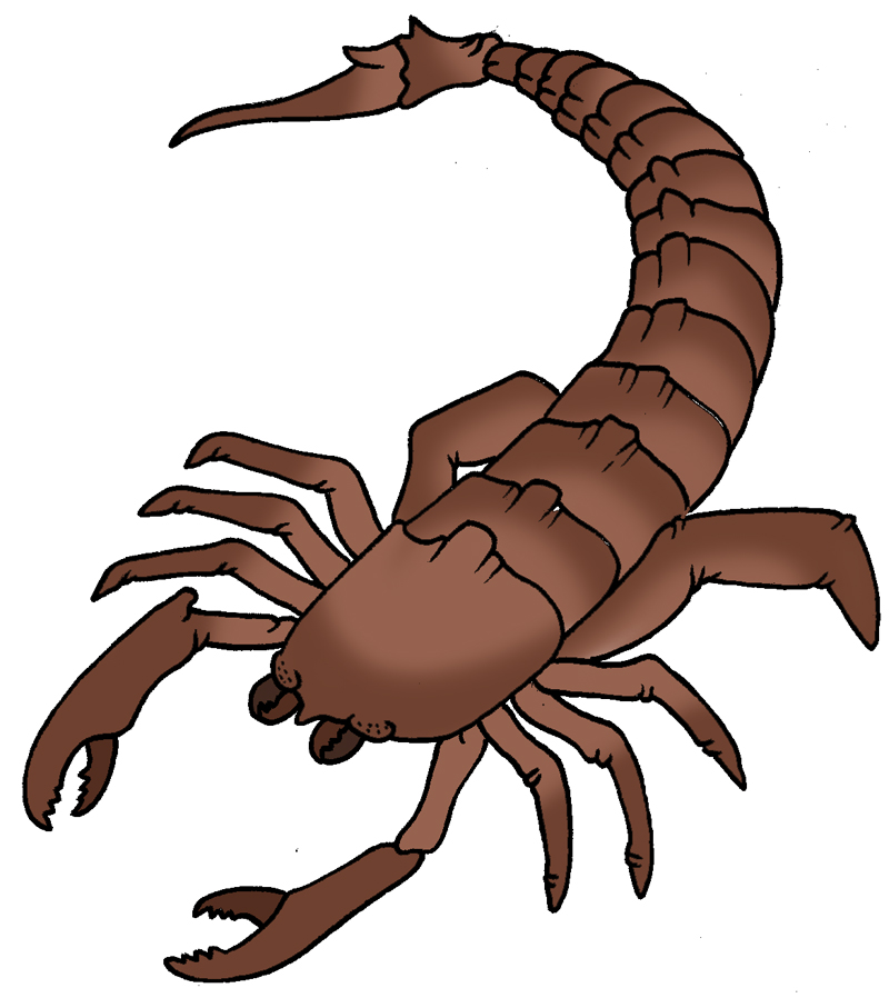 Scorpion clipart hostted