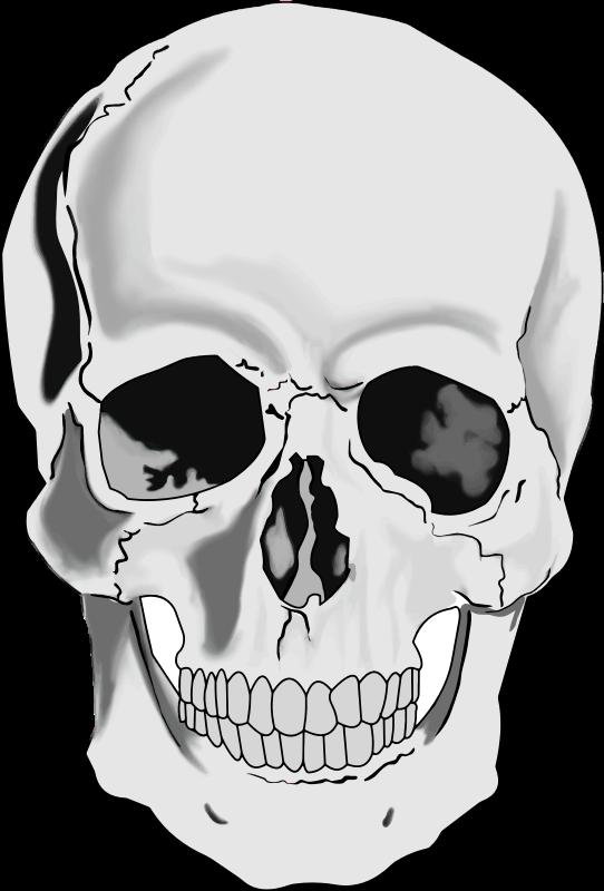 Skull clipart clipartbold 2