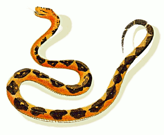 Snake clipart snakeclipart snake clip art animals 4