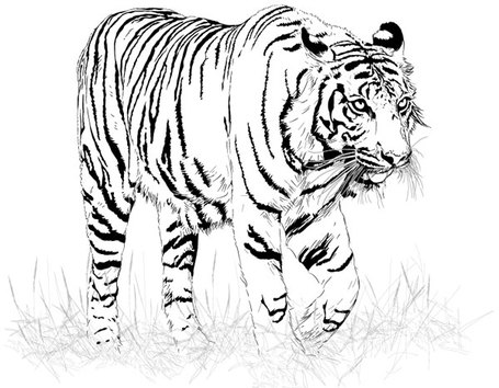 Tiger  black and white black and white tiger clip art 2