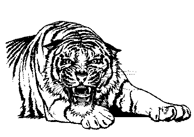 Tiger  black and white free black and white tiger clipart 1 page of clip art
