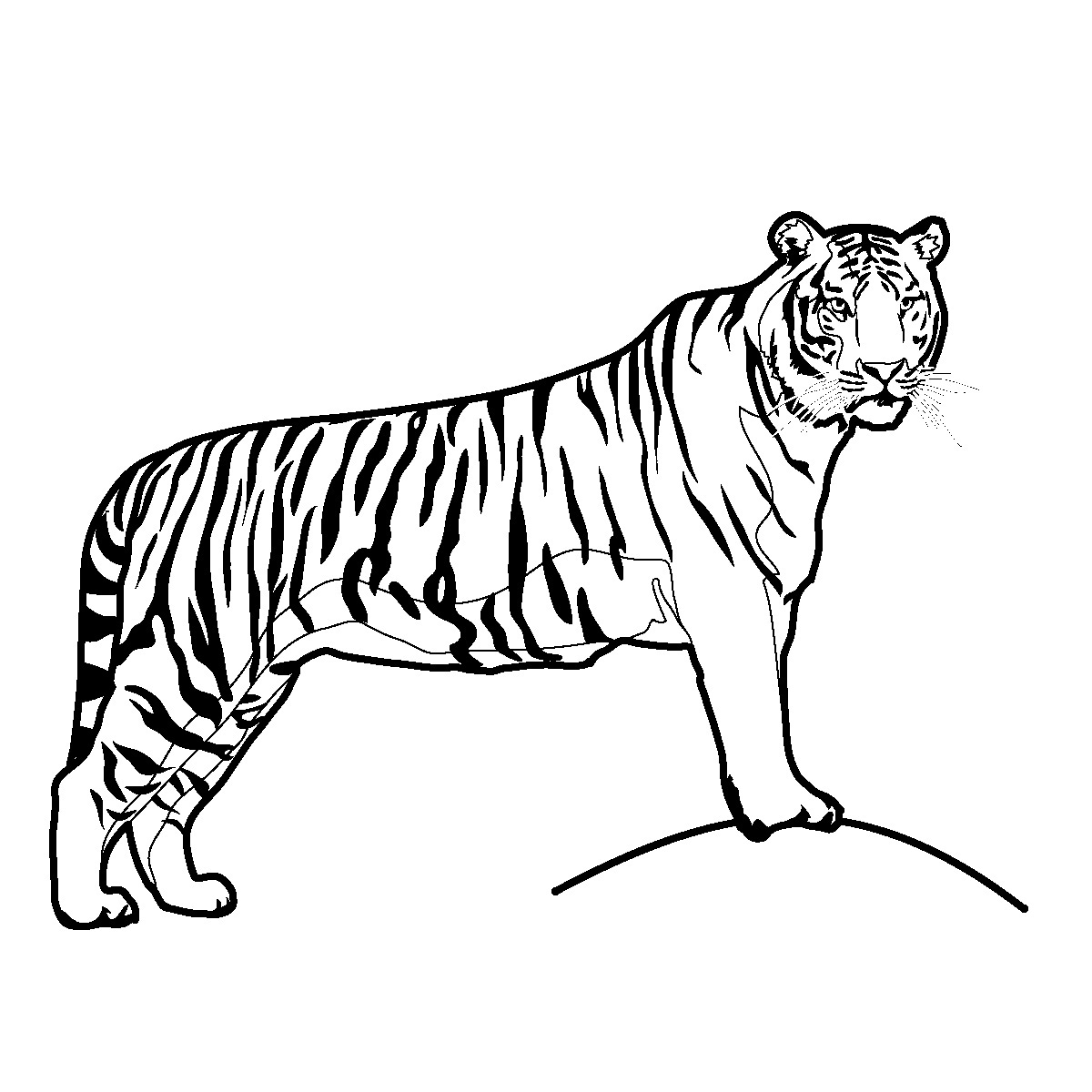 Tiger  black and white tiger black and white clipart 4
