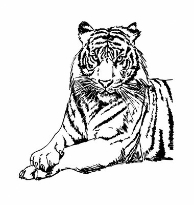 Tiger  black and white tigers clipart and stock vector by bigsun image 5