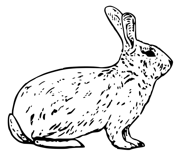 Bunny Black And White White Rabbit Clipart 3