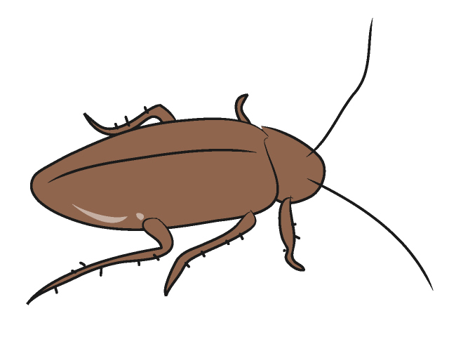 Cockroach clip art free clipart images 2