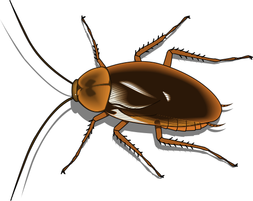 Cockroach clip art free clipart images