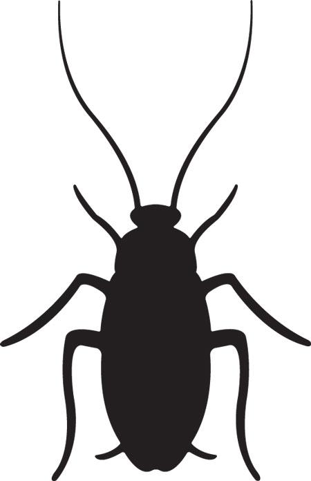 Cockroach clip art
