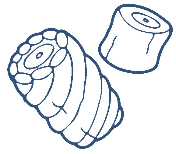Marshmallow clip art clipart