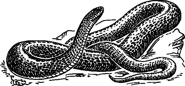 Snake  black and white black snake clip art at vector clip art
