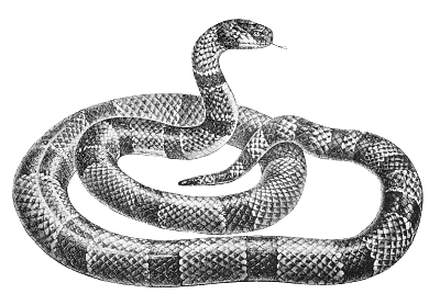 Snake  black and white free black and white snake clipart 1 page of clip art 3