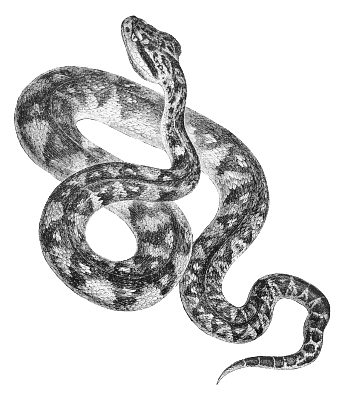 Snake  black and white free black and white snake clipart 1 page of clip art 4