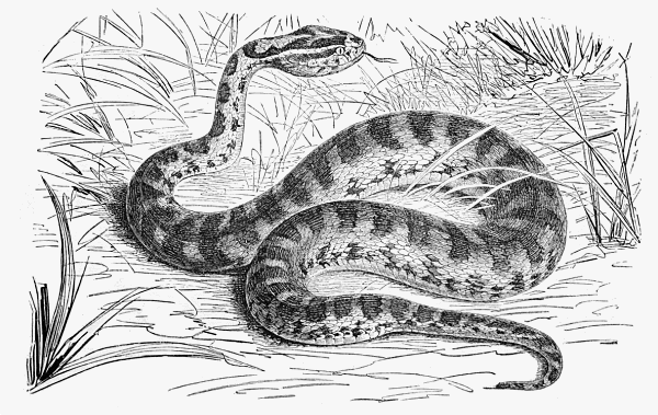 Snake  black and white free black and white snake clipart 1 page of clip art 5