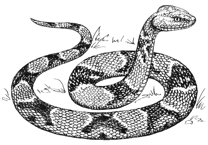 Snake  black and white free black and white snake clipart 1 page of clip art