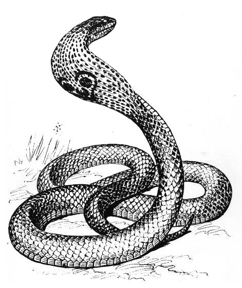 Snake  black and white free black and white snake clipart picture of