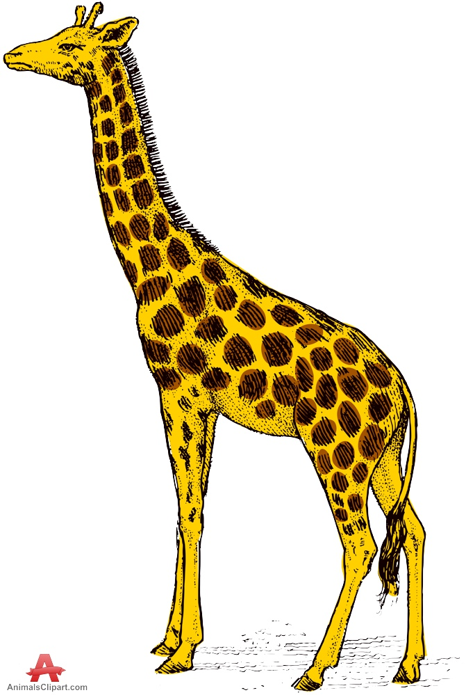Animals clipart of giraffe with the keywords