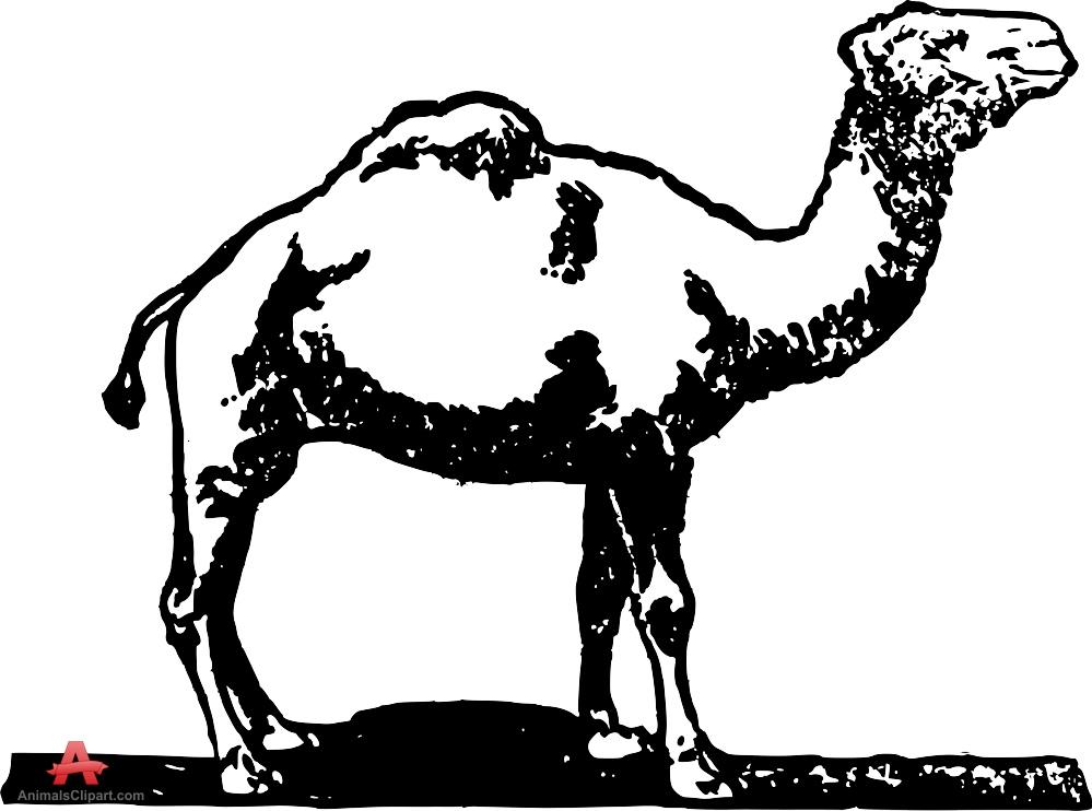 Bold outline camel clipart free design download