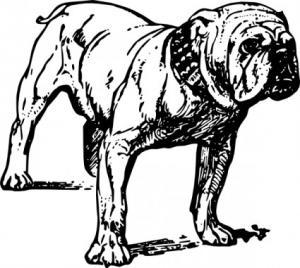 Bulldog clip art download