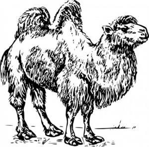 Camel clip art download 2