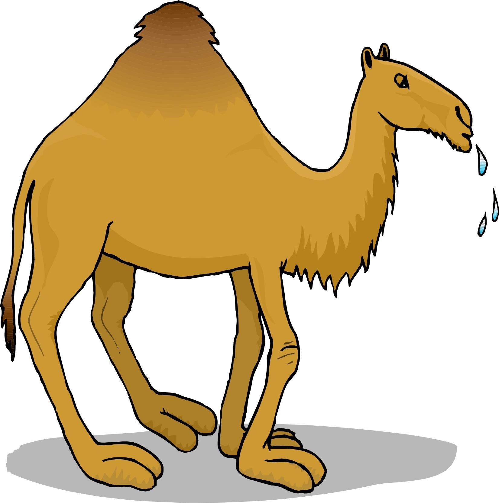 Camel clip art vector graphics 2