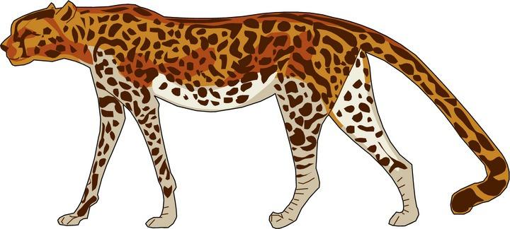 Cheetah clipart 3