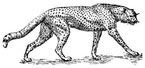Cheetah clipart 4 2