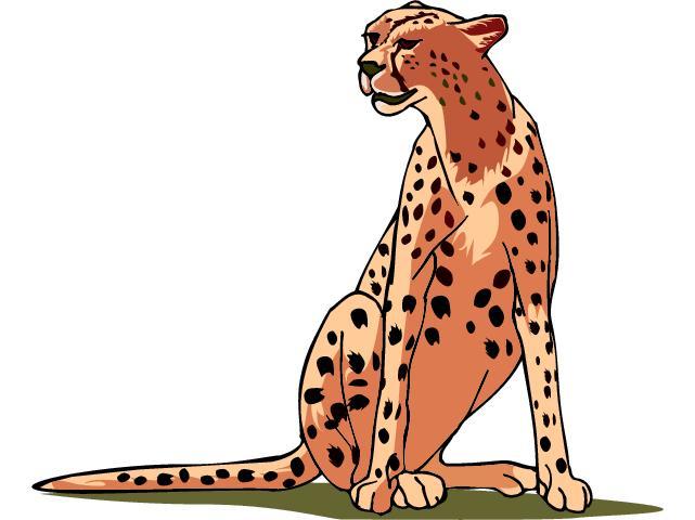 Cheetah clipart 4