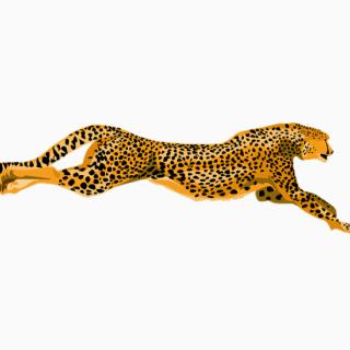 Cheetah clipart clipart
