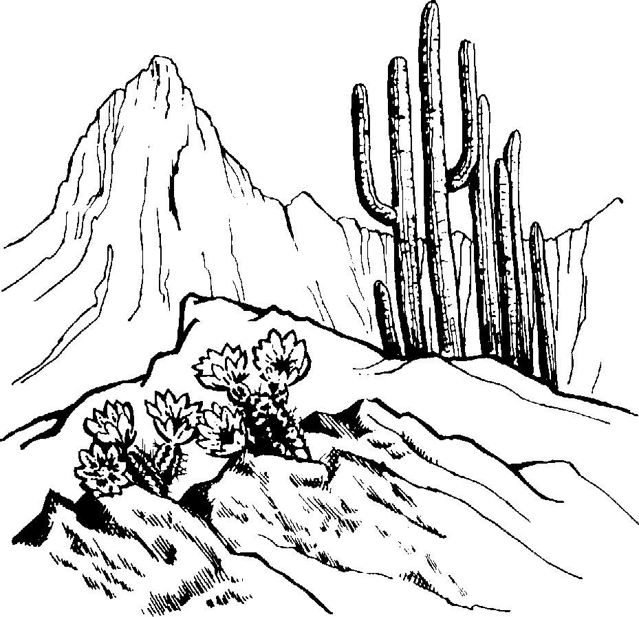 Desert scenes clipart 7