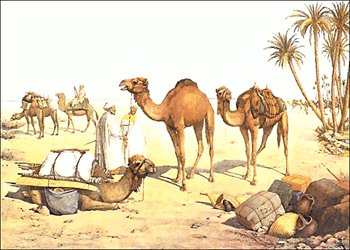 Free camels clipart graphics images and photos 2