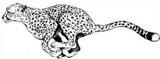 Free cheetah clipart