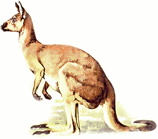Free kangaroo clipart 1 page of clip art