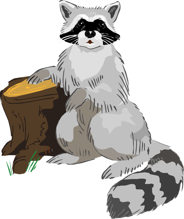 Free raccoon clipart 2
