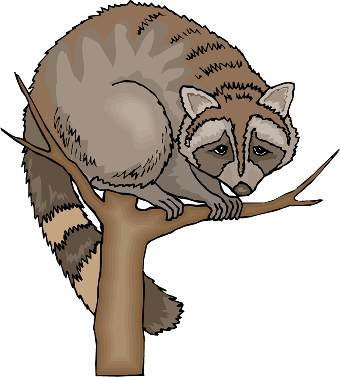 Free raccoon clipart 4