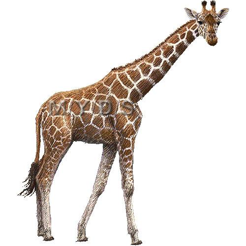 Giraffe clip art free clipart images 7