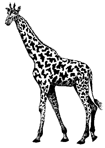Baby Giraffe Clip Art Black And White