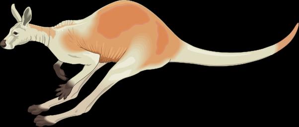 Kangaroo clipart free clipartfest 2