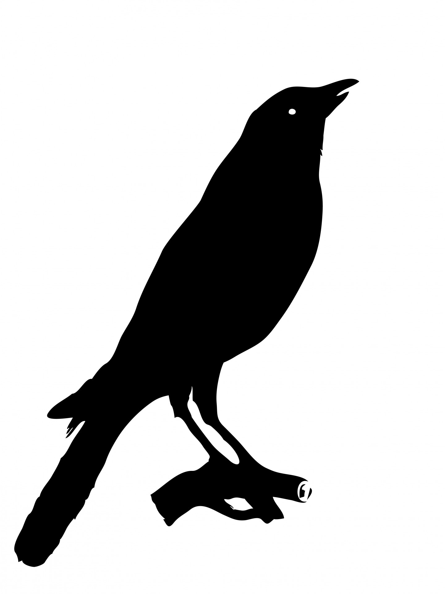 Bird crow clipart free pictures