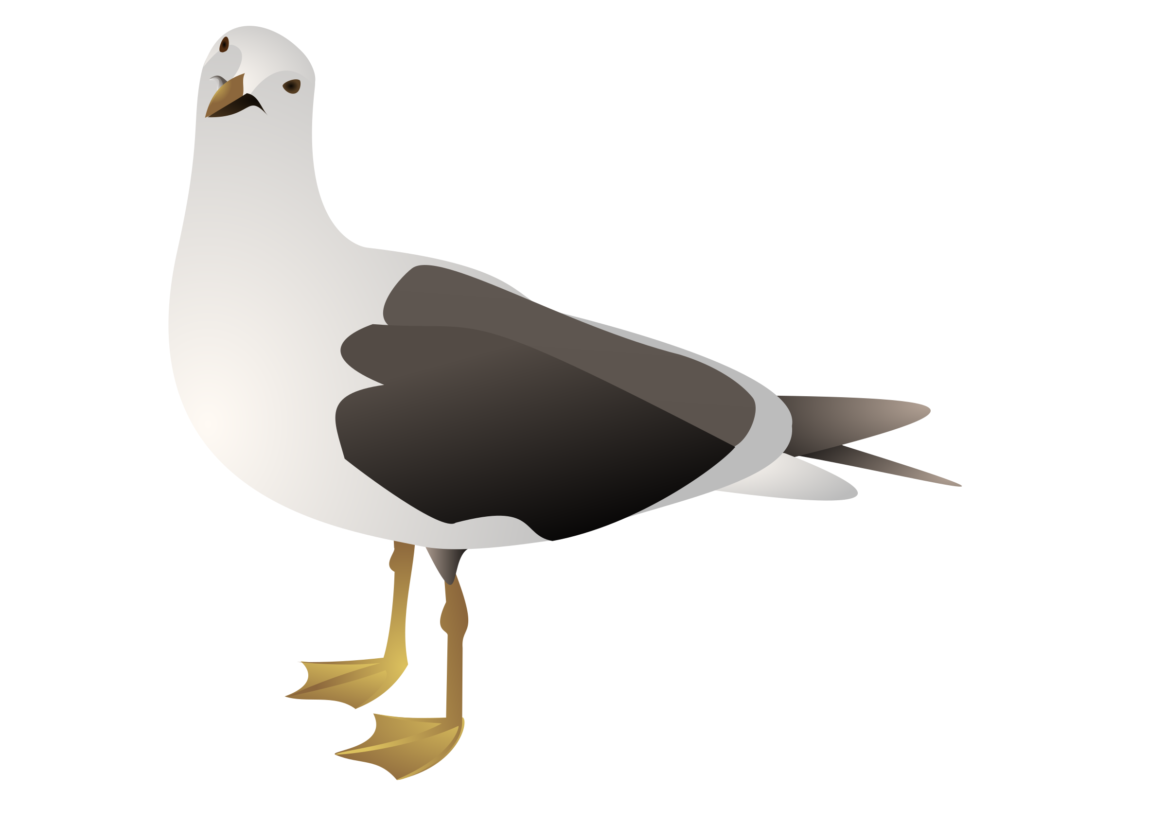 Clipart seagull