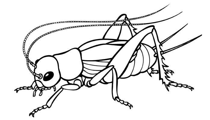 Cricket drawings clip art clipartfest 3
