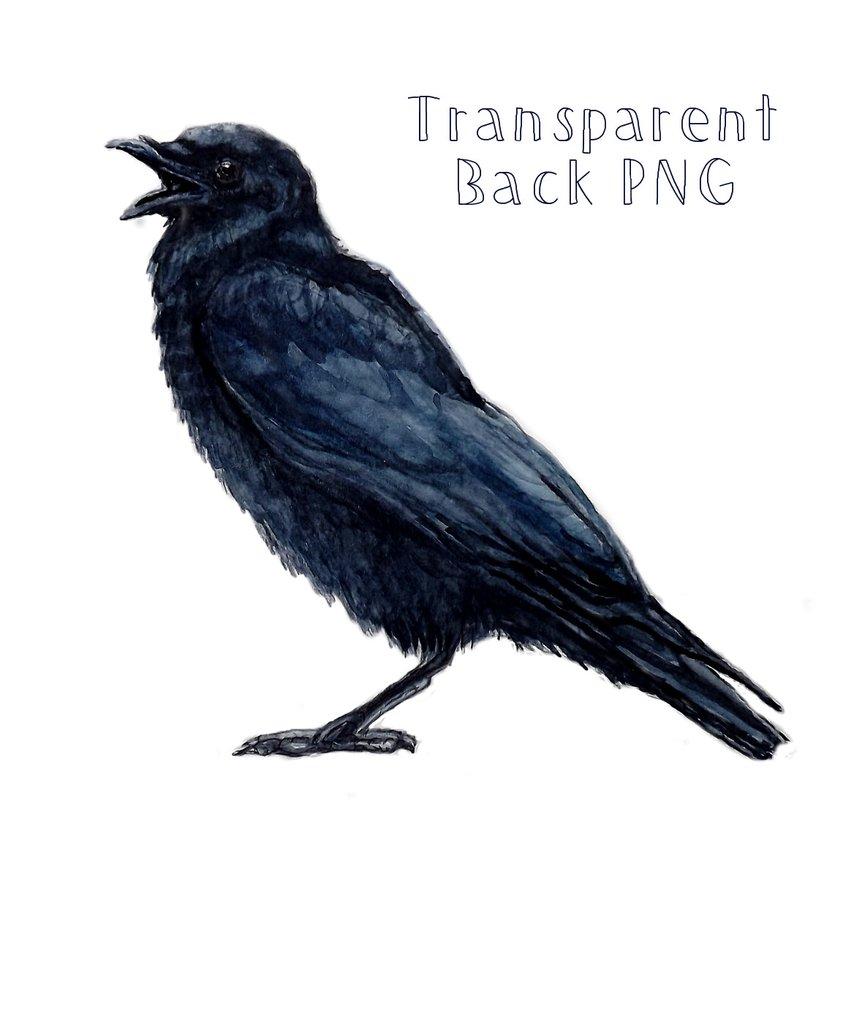 Crow clip art 8 crow clipart fans 3