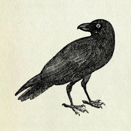Crow clip art sandberg flickr