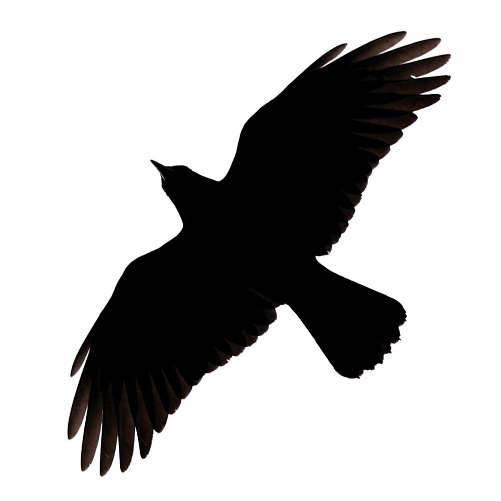 Crow clipart birds and clip art photo crowclipart 2